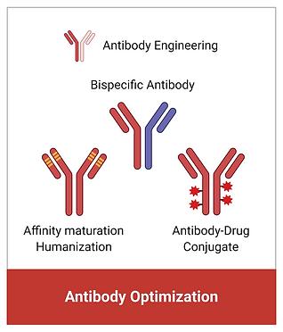 antibody 02.png