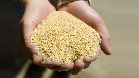 soybean meal.jpg