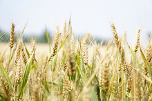 grain.jpeg