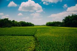 Greenfields.jpg