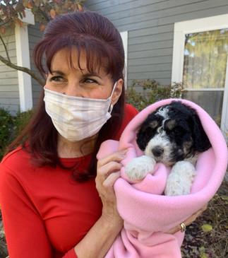 Ohio COVD 19 Puppy Sales