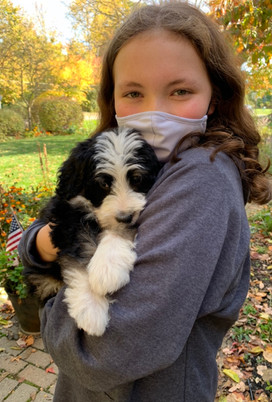 COVD 19 Puppy Sales