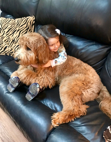 Ohio | Bernedoodles | Poodles | Happy Families