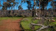 Echidna Trail-24.jpg