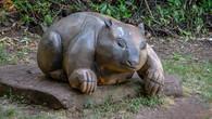 Wombat Hill-11.jpg
