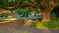 Wombat Hill-48.jpg