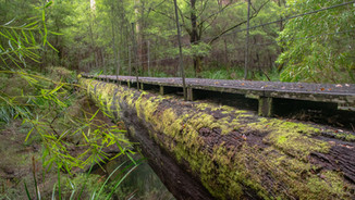 Donnelly River to Pemberton