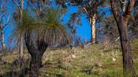 Echidna Trail-22.jpg