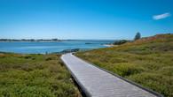 Penguin Island-53.jpg