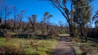 Echidna Trail-2.jpg