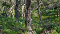 Bay of Fires - Day Four-44.jpg