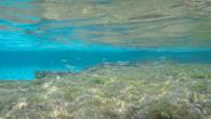 Little Salmon Bay-30.jpg