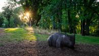 Wombat Hill-32.jpg