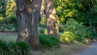 Wombat Hill-9.jpg