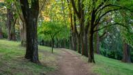 Wombat Hill-25.jpg