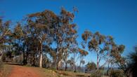 Echidna Trail-36.jpg