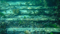 Omeo Wreck-43.jpg