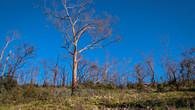 Echidna Trail-3.jpg