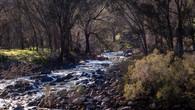 Echidna Trail-7.jpg