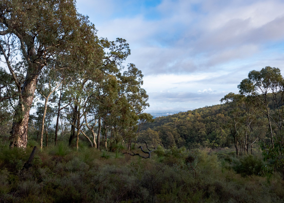 Honeyeater Hike