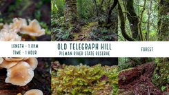 Old Telegraph Hill.png