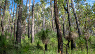 Dwellingup to Collie