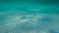 Omeo Wreck-1.jpg