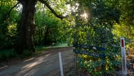 Wombat Hill-6.jpg
