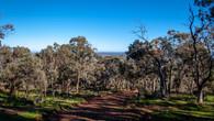 Echidna Trail-32.jpg