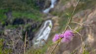 Lesmurdie Falls-20.jpg