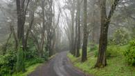 Wombat Hill-64.jpg