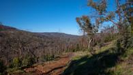 Echidna Trail-17.jpg