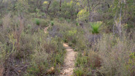 Numbat Trail-76.jpg