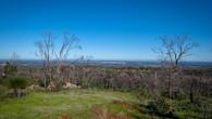 Echidna Trail-40.jpg