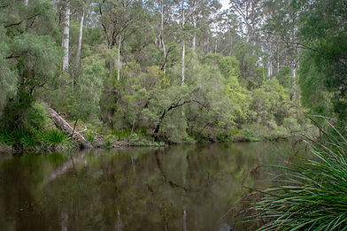 Warren River Loop Trail-71.jpg