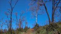 Echidna Trail-14.jpg