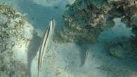 Omeo Wreck-5.jpg