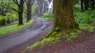 Wombat Hill-65.jpg
