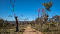 Echidna Trail-43.jpg