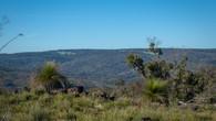Echidna Trail-41.jpg