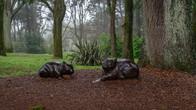 Wombat Hill-68.jpg