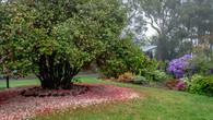Wombat Hill-69.jpg