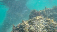 Omeo Wreck-6.jpg