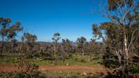 Echidna Trail-37.jpg