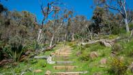 Numbat Trail-34.jpg