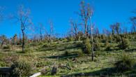 Echidna Trail-21.jpg