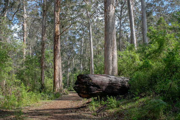 Warren River Loop Trail-5.jpg