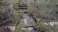 Numbat Trail-50.jpg