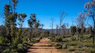Echidna Trail-42.jpg