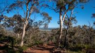 Echidna Trail-34.jpg